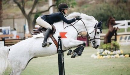 Letselschade dieren | Paardrijden manage